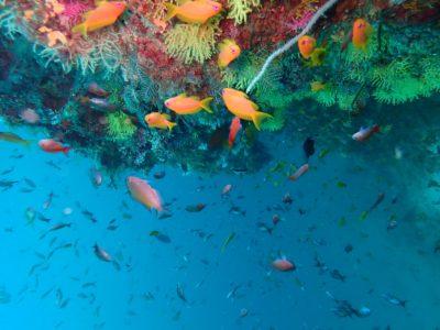 Photo of PADI Adventure Diver