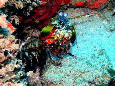 Photo of PADI Advanced Open Water Diver